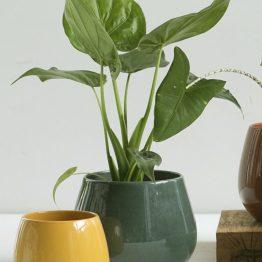 Keramik Blumentopf Cielo