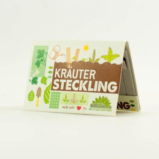 Kräuter Steckling