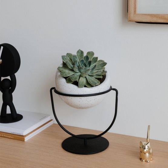 Auch hier ist der Pflanzenhalter die perfekte Dekoration für jeden Schreibtisch.