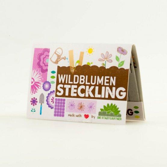 Wildblumen Steckling