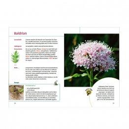 Heilpflanzen finden und Rezepte zum Verarbeiten - ein Blitzkurs für Anfänger aus dem Ulmer Verlag